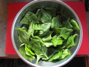 madrigal greens, a perennial plant sort of like spinach, I am putting it in everything